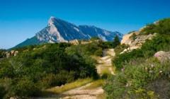 Гора Монте Долья