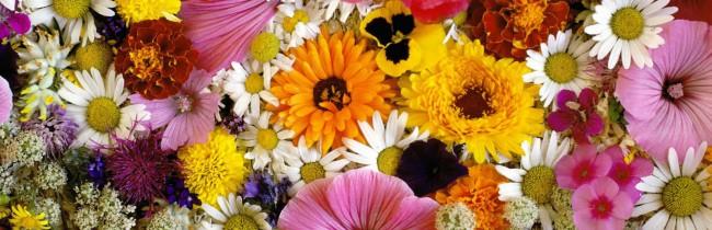 Фестиваль земляники и цветов в Неми